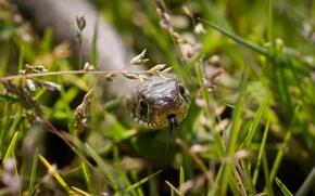 Picture language, grass, macro, snake