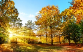 Picture Nature, Autumn, Trees, Rays Of Light, Seasons