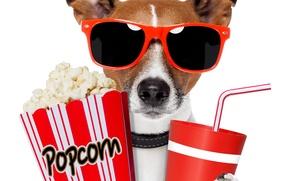 Picture dog, glasses, drink, popcorn
