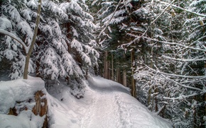 Picture forest, snow, trees, traces, Winter, frost, forest, path, trees, nature, winter, snow, path, frost
