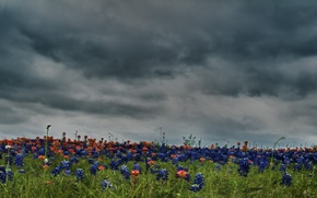 Wallpaper the sky, color, clouds, flowers, nature, field, HDR, colors, hdr, beautiful, flower, sky, field, nature, ...