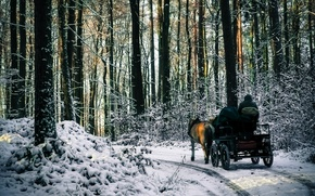 Picture forest, snow, trees, Winter, morning, frost, track, forest, road, nature, winter, snow, trip, morning, path, …