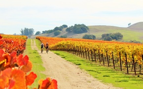 Picture nature, sport, two, bikes, couple riding bicycles