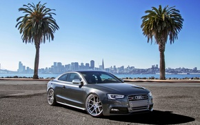 Picture palm trees, Audi, Audi, coupe, sports car