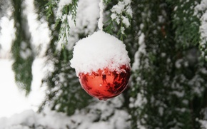 Picture snow, branches, reflection, Christmas toy