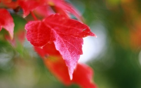 Picture autumn, leaves, macro, nature