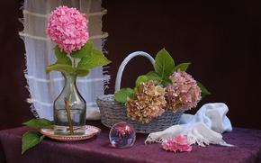 Picture still life, basket, hydrangea