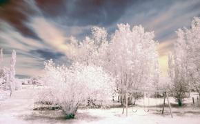 Wallpaper trees, white, swing