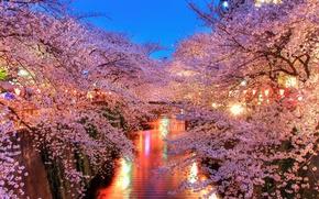 Picture lights, Sakura, channel