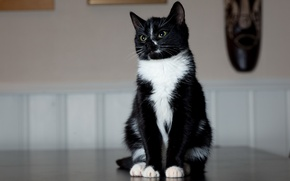 Picture cat, black and white, legs, sitting