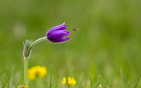 Wallpaper flower, grass, lilac, insect