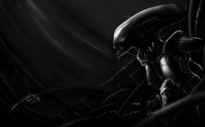 Picture black and white, pose, silhouette, creature, alien mother