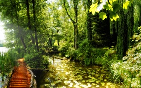 Picture pond, Lily, beauty, forest.path