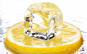 Picture ice, lemon, cubes, food, citrus, food, citrus, ice cubes, Limon