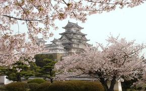 Picture castle, Japan, Japan, flowering, Himedzi