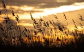 Picture grass, sunrise, bokeh