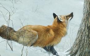 Wallpaper forest, Fox, Robert Bateman, winter, art, snow