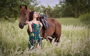 Picture field, summer, face, horse, horse, Asian