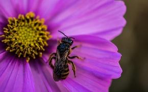 Picture flower, macro, flower, macro, wasp, OSA