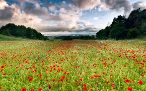 Picture Italy, field of flowers, Italy, Lazio, Lazio, field of flowers, Cerveteri, Cerveteri