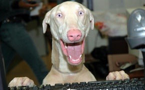 Picture animals, bald, computer, dogs