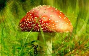 Wallpaper greens, mushroom, Mushroom