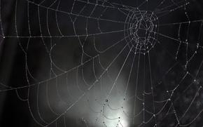 Picture Macro, Drops, Web, Macro, Drops