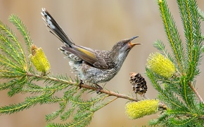 Picture leaves, flowers, bird, branch, feathers, beak, tail, bump