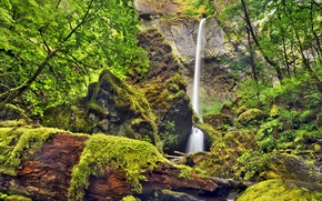 Picture trees, rock, stones, waterfall, moss