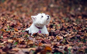Picture dog, autumn, leaves