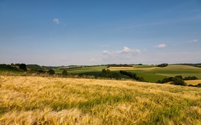 Picture field, summer, landscape, nature