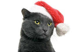 Picture cat, animals, cat, red, grey, holiday, dark, new year, white background, Santa, cap, yellow eyes, …