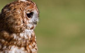Picture portrait, background, profile, bird, owl