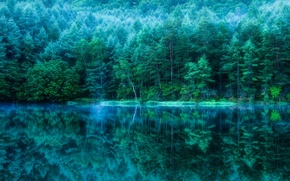 Picture forest, trees, nature, pond, reflection, Japan, pond