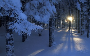 Picture forest, the sun, light, snow, trees, branches, lights, Winter