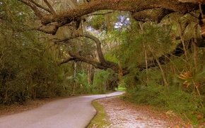 Picture road, forest, forest, Nature, road