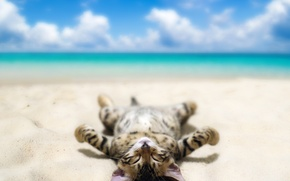 Picture sand, sea, beach, the sky, cat, clouds, humor, lies, bokeh, tans