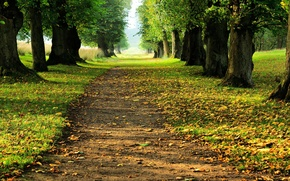 Picture autumn, landscape, Woodland Avenue