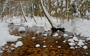 Picture winter, forest, snow, trees, pond, frost, forest, Nature, trees, winter, snow, pond, frost