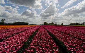 Picture horizon, trees, farm, horizon, farm, trees, wildflowers, flowers field