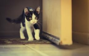 Picture cat, eyes, eyes, cat, walking, walking