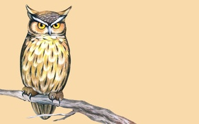 Picture owl, bird, branch, painting, light background, owl, wise, cruise