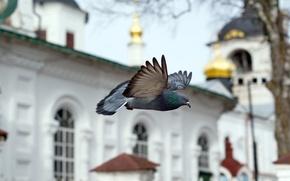 Picture FLIGHT, BIRD, TEMPLE, DOVE, CHAPEL, CHURCH