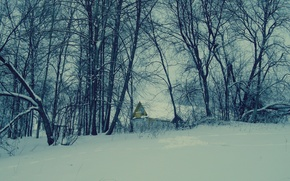 Picture snow, trees, nature, house