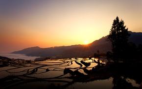 Picture sunrise, rice fields, Duoyishu