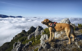 Picture the sky, clouds, mountains, Dog, wool