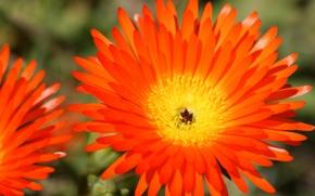 Picture field, flower, petals, garden, meadow