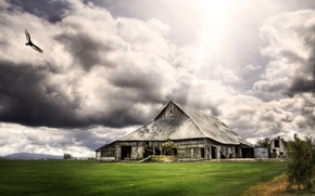 Picture grass, clouds, bird, the barn