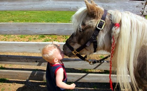 Picture mood, boy, pony