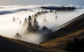 Wallpaper fog, morning, mountains